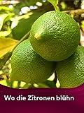 Wo die Zitronen blühn